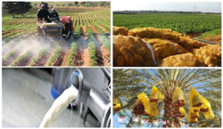 Agriculture: Domestic production covers 70% of food needs